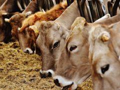 Biomasa i biogas na poljoprivrednim gazdinstvima